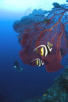 Papua New Guinea is one of the premieir scuba diving destinations