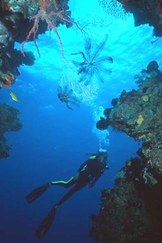 Diving in Papua New Guinea offers everything, from Pygmy Seahorses, sharks, and occasional Orca's